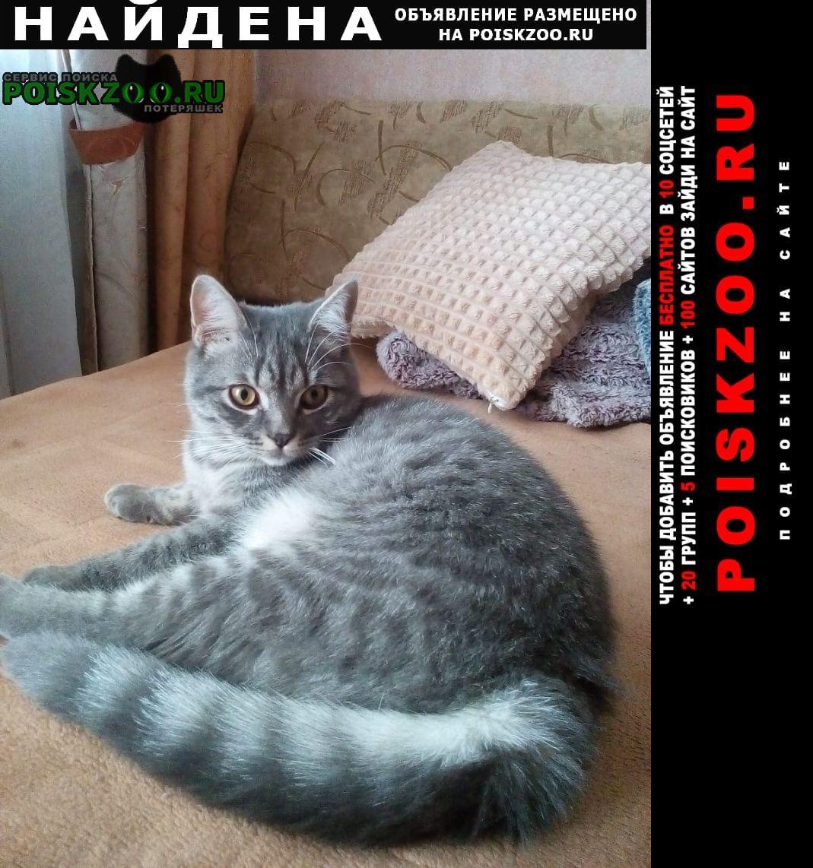 Найдена кошка кот серо-полосатый Люберцы