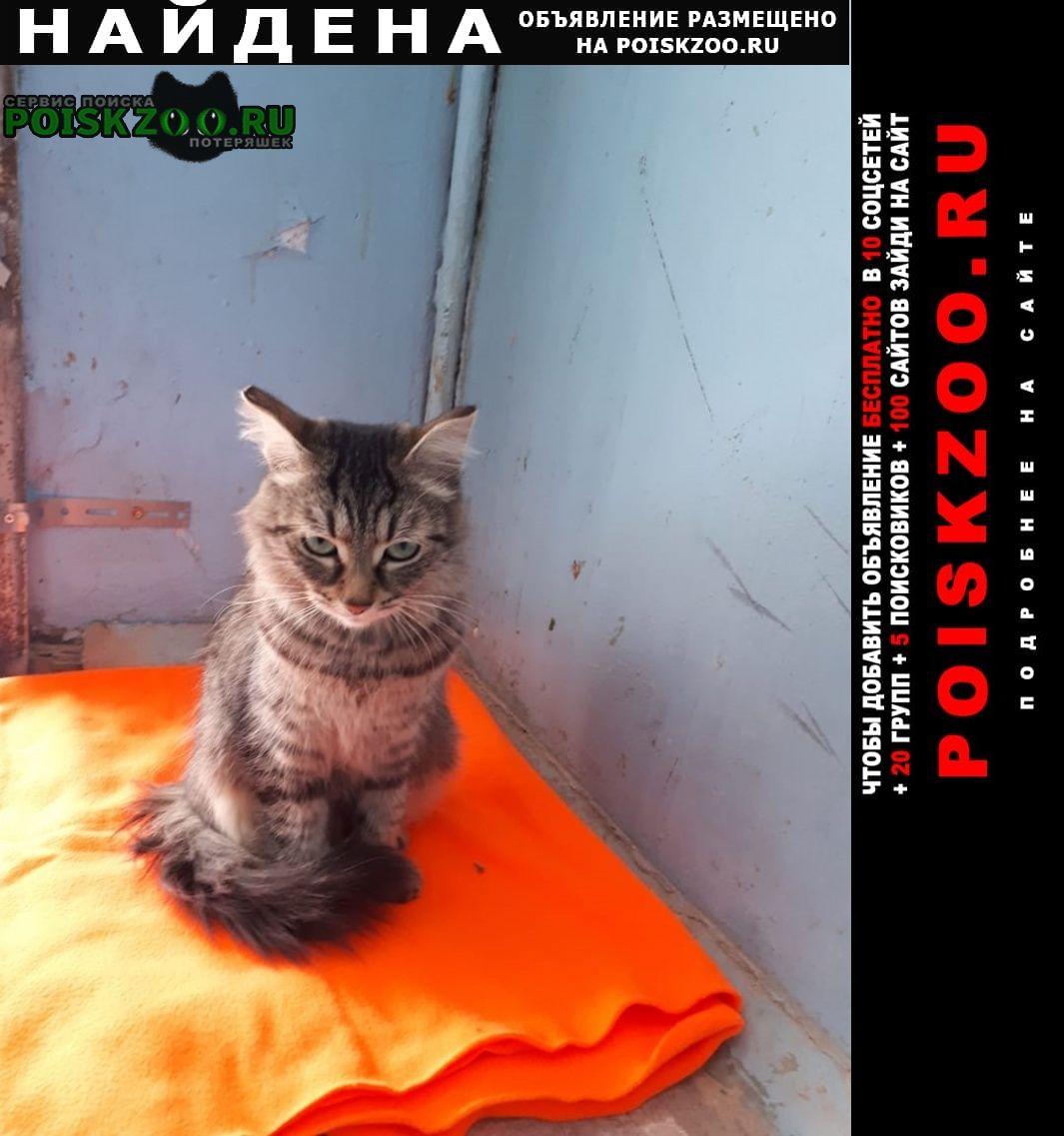 Найдена кошка кошечка район южного автовокзала Екатеринбург