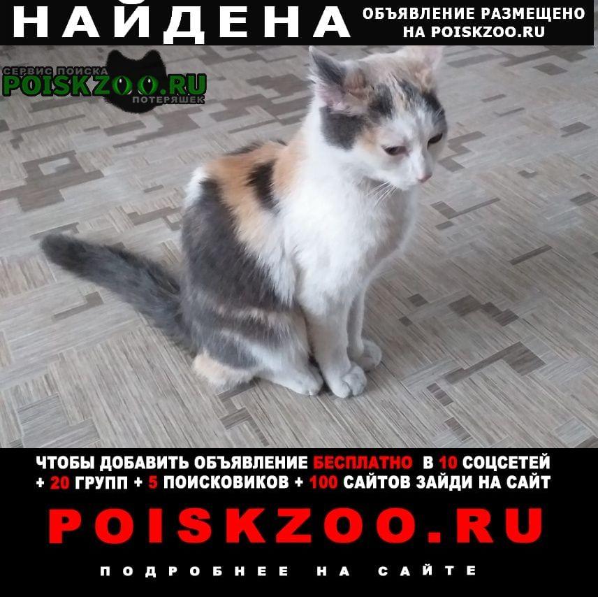 Найдена кошка Саяногорск