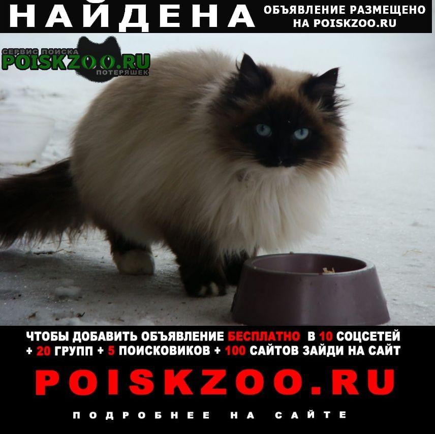 Найдена кошка или кот Яхрома