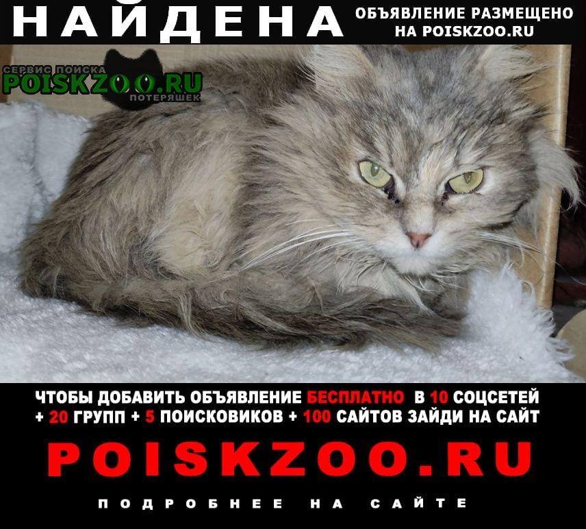 Найдена кошка. Москва