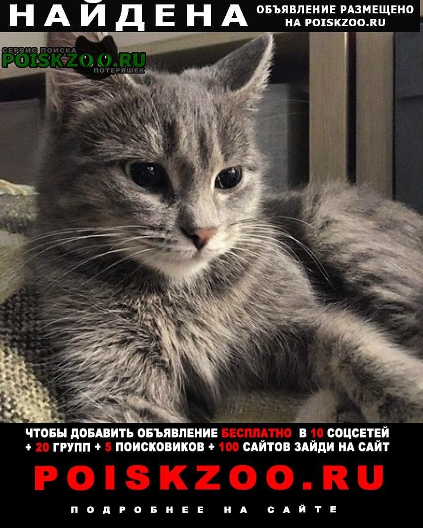 Найдена кошка срочно Тюмень