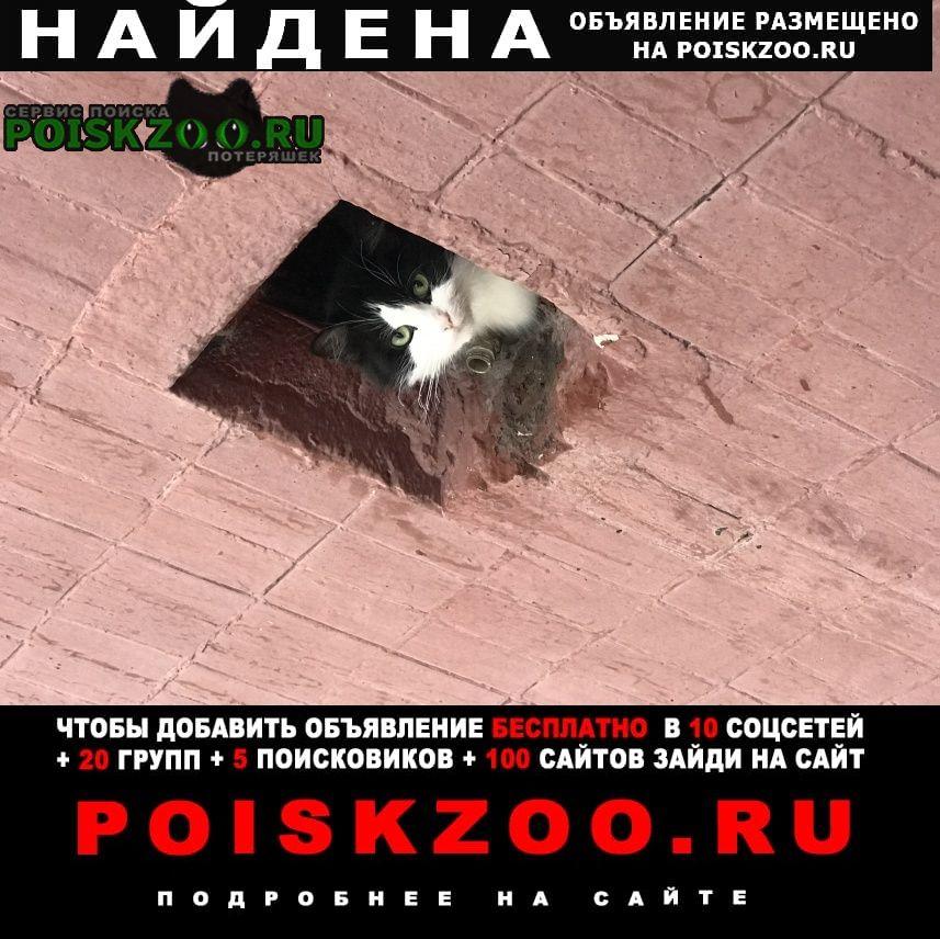 Найдена кошка улица ангарская дом 65 Москва