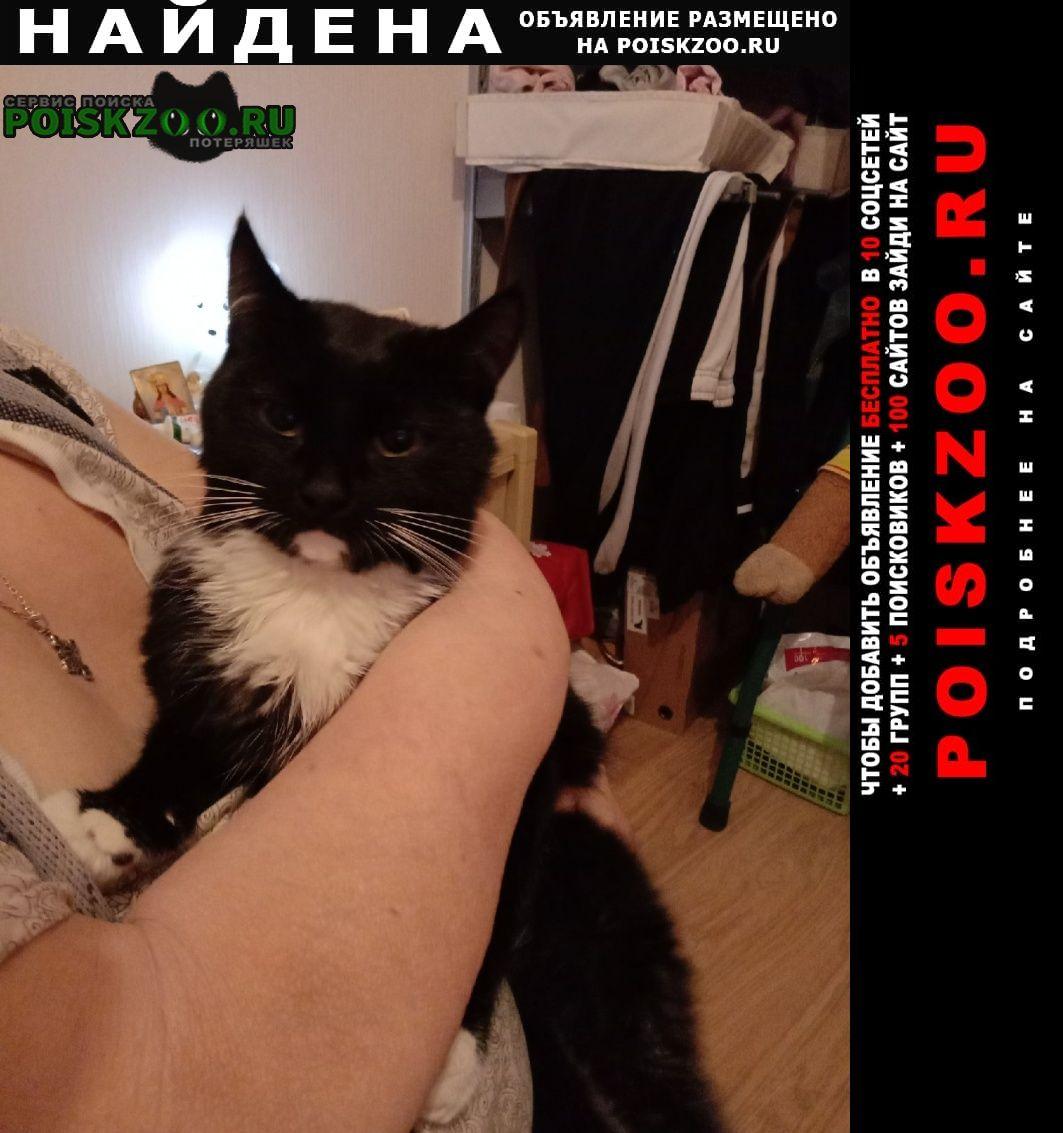 Найден кот Железнодорожный (Московск.)