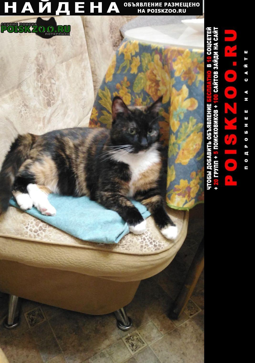 Найдена кошка я Санкт-Петербург