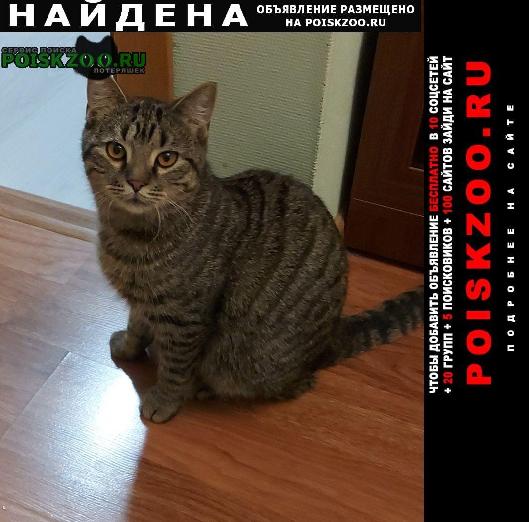 Найден кот кузьминки Москва