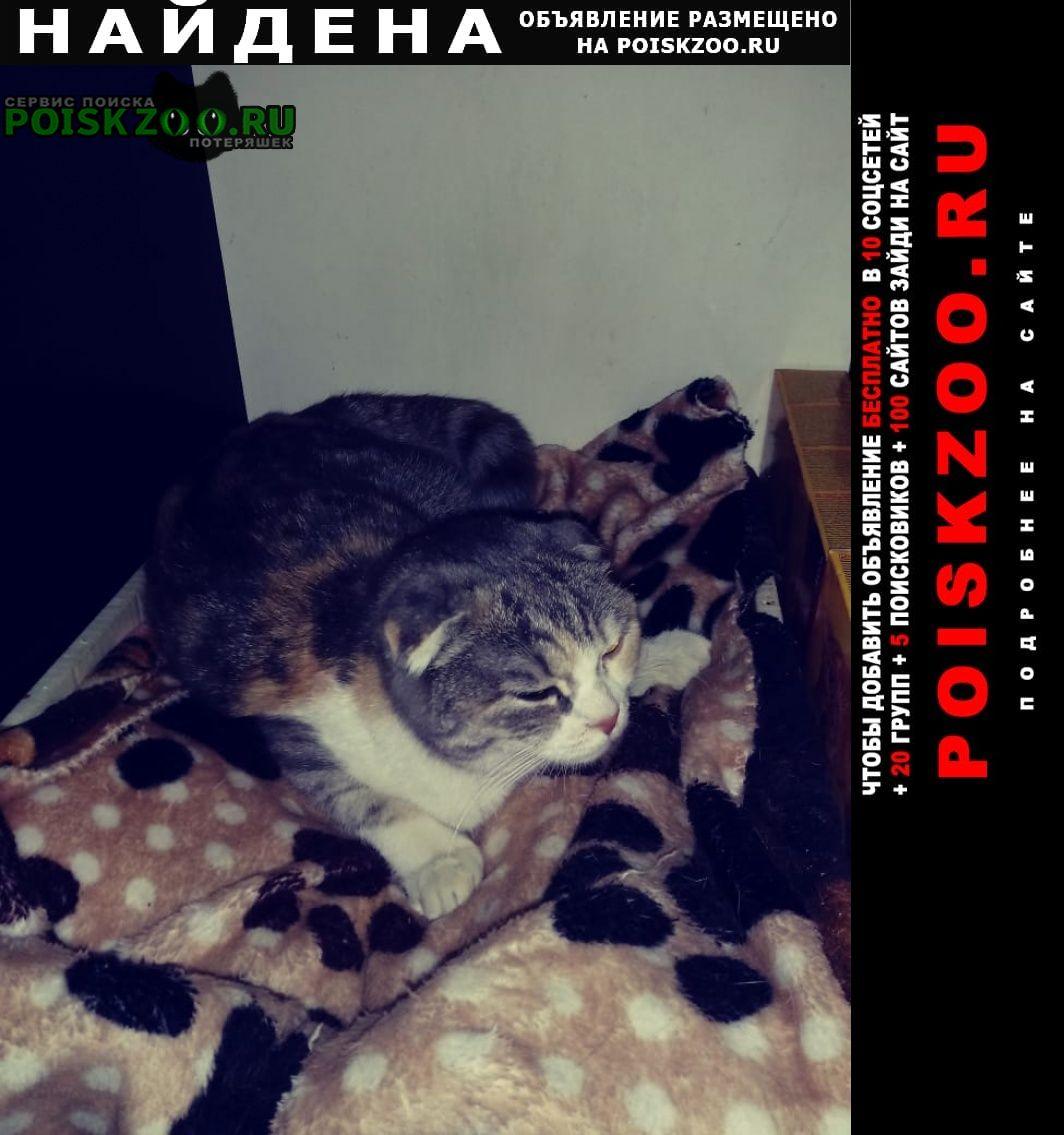 Найдена кошка западный район Краснодар