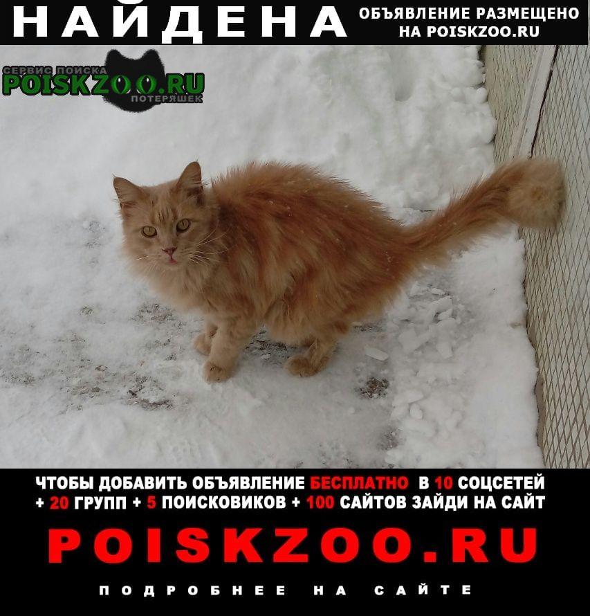 Найден кот рыжий Чехов