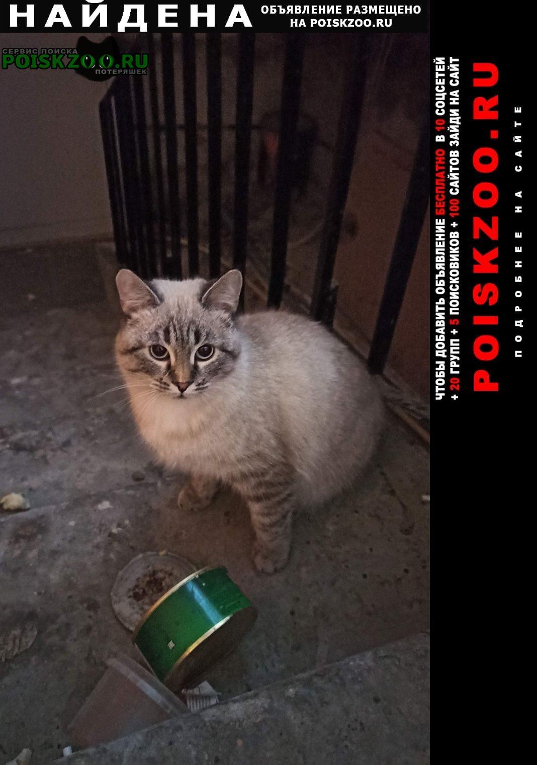 Найдена кошка район всо Саратов