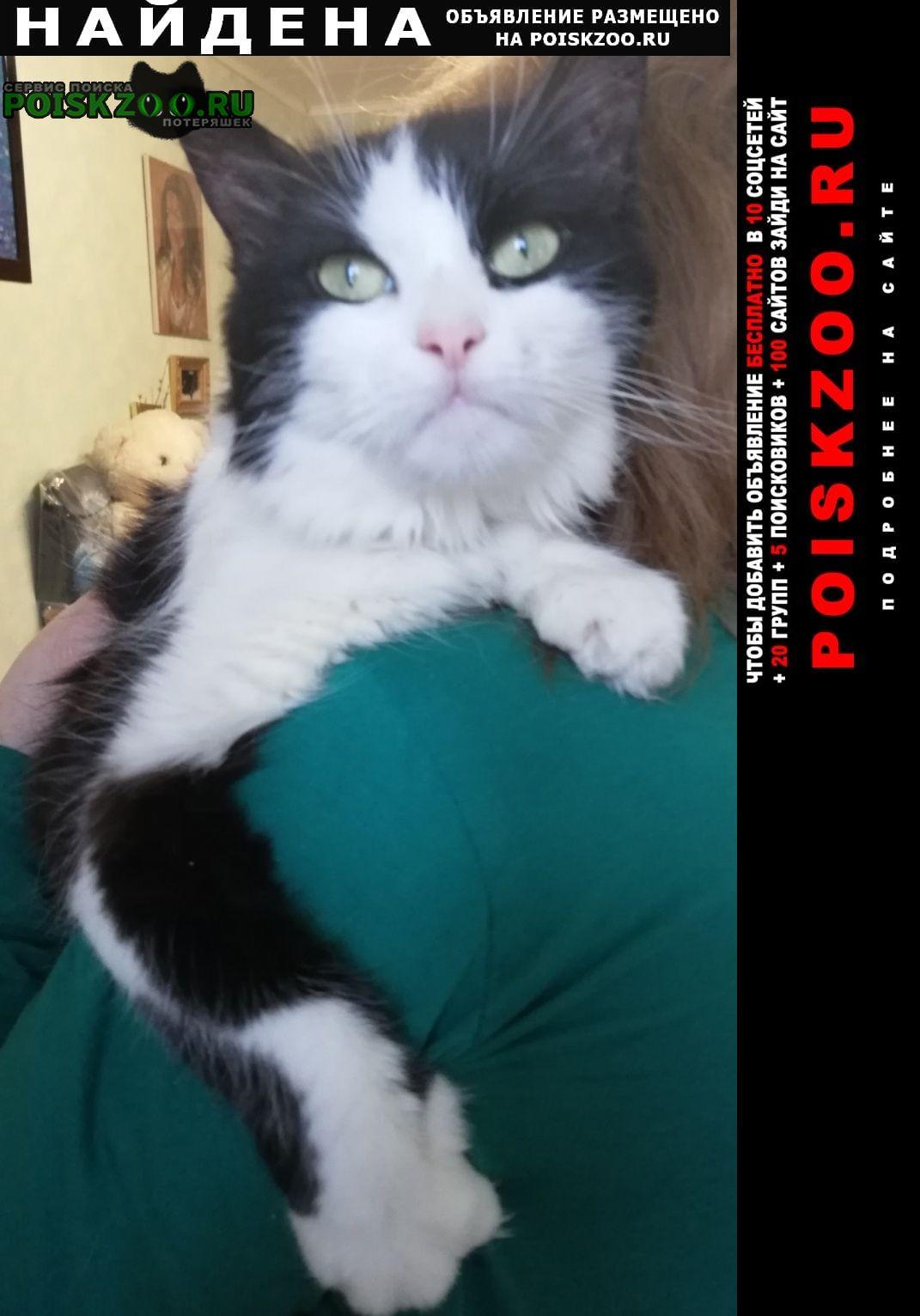 Найдена кошка сао ул. ангарская Москва