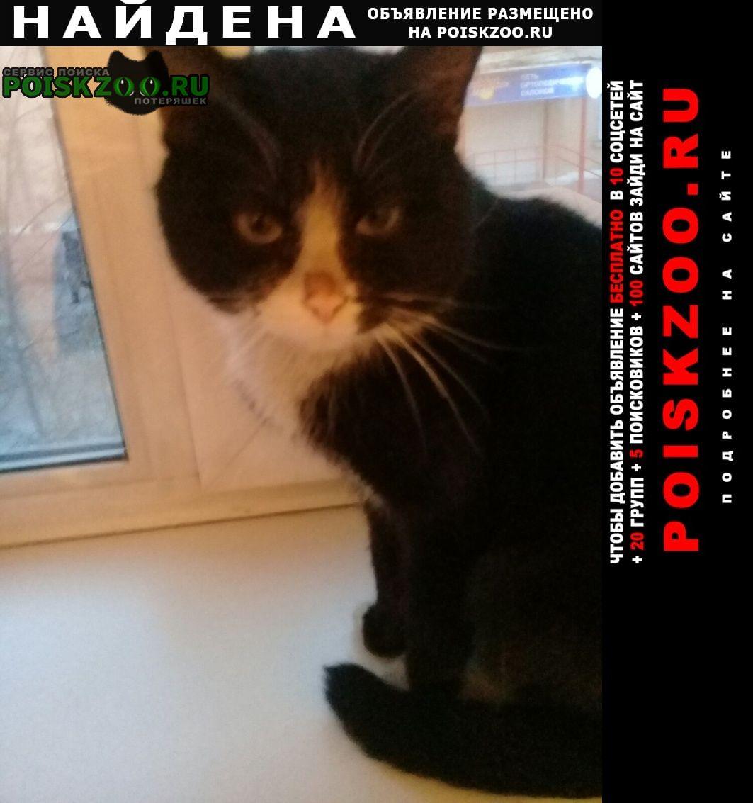 Найден кот черно-белый Улан-Удэ