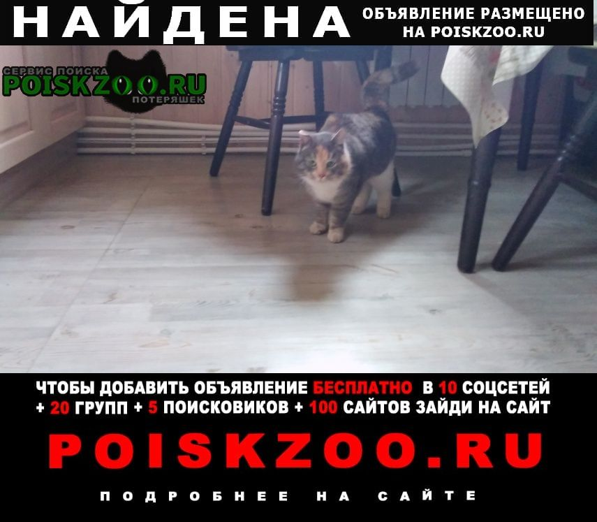 Найдена кошка ищем хозяев Великий Новгород (Новгород)