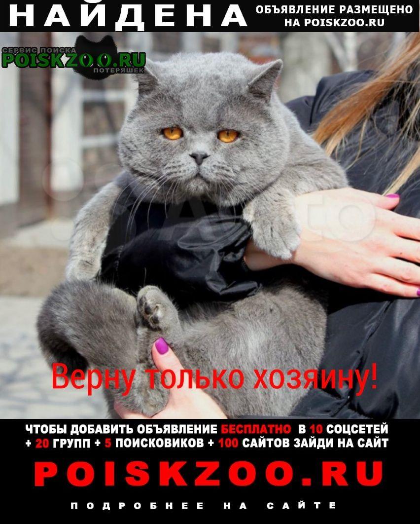 Найден кот Ростов-на-Дону