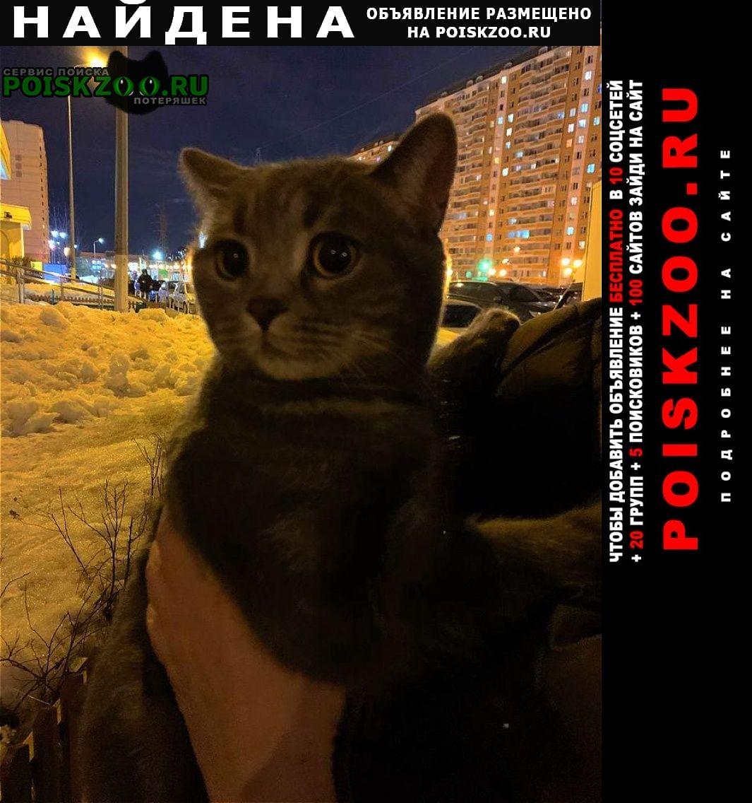 Найдена кошка кот Балашиха