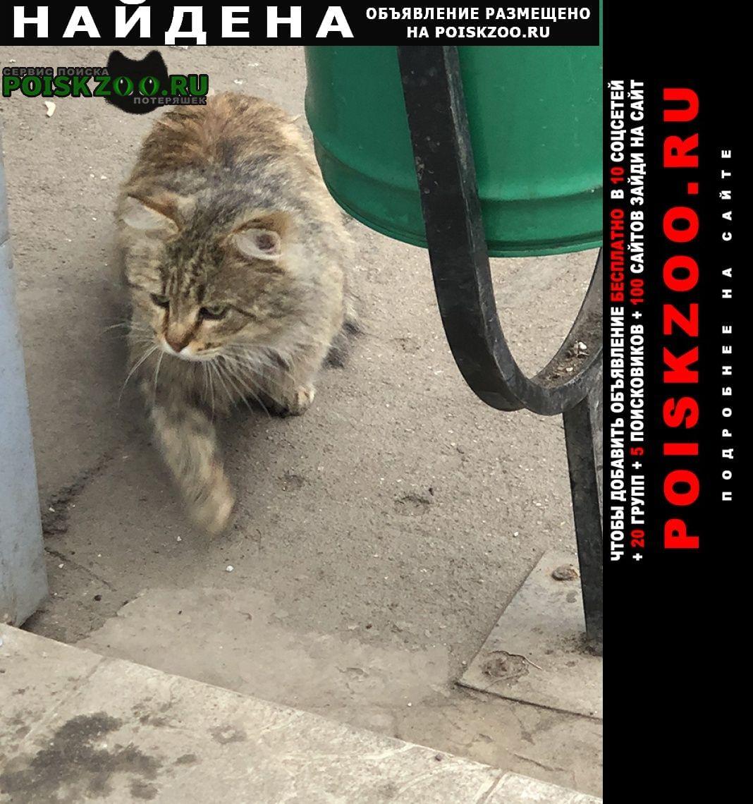 Найден кот замечен домашний Москва