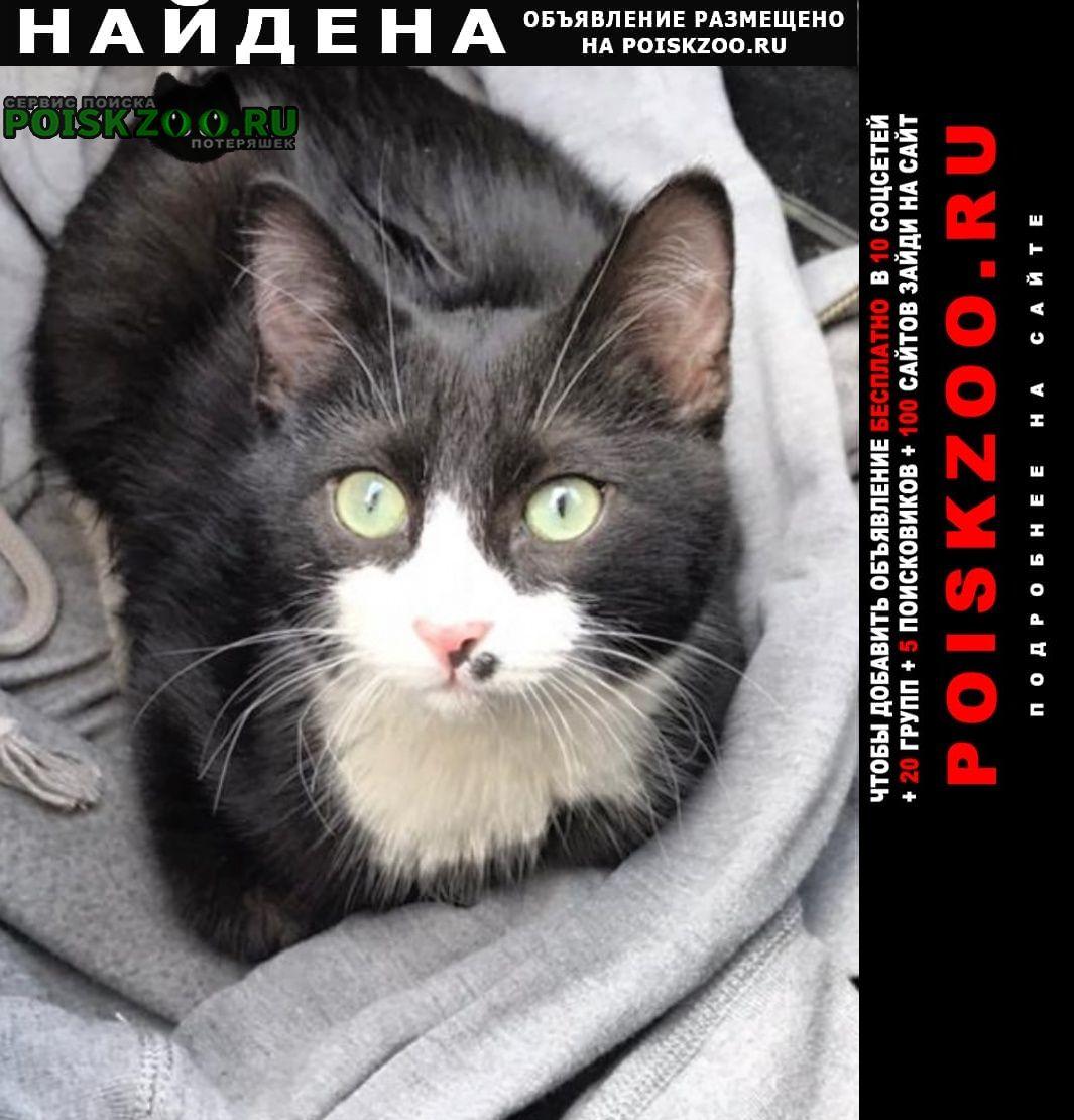 Найден кот молодой, черно-белый Санкт-Петербург