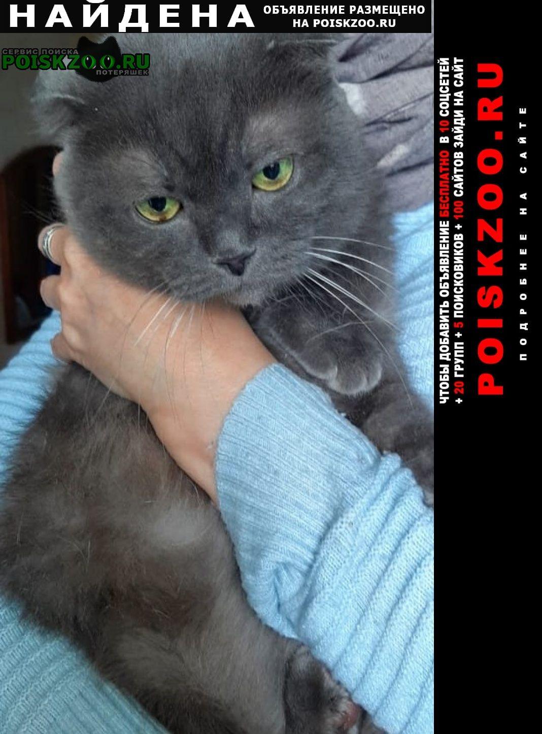 Найден кот Новороссийск