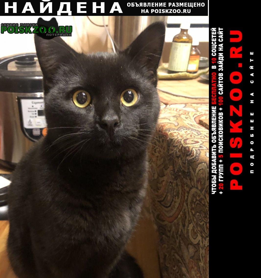 Найден кот чёрный короткошерстный Москва