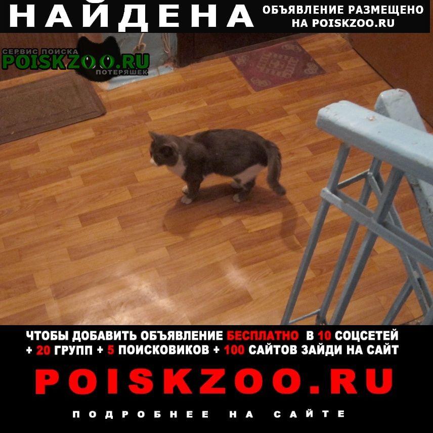 Найден кот Томск