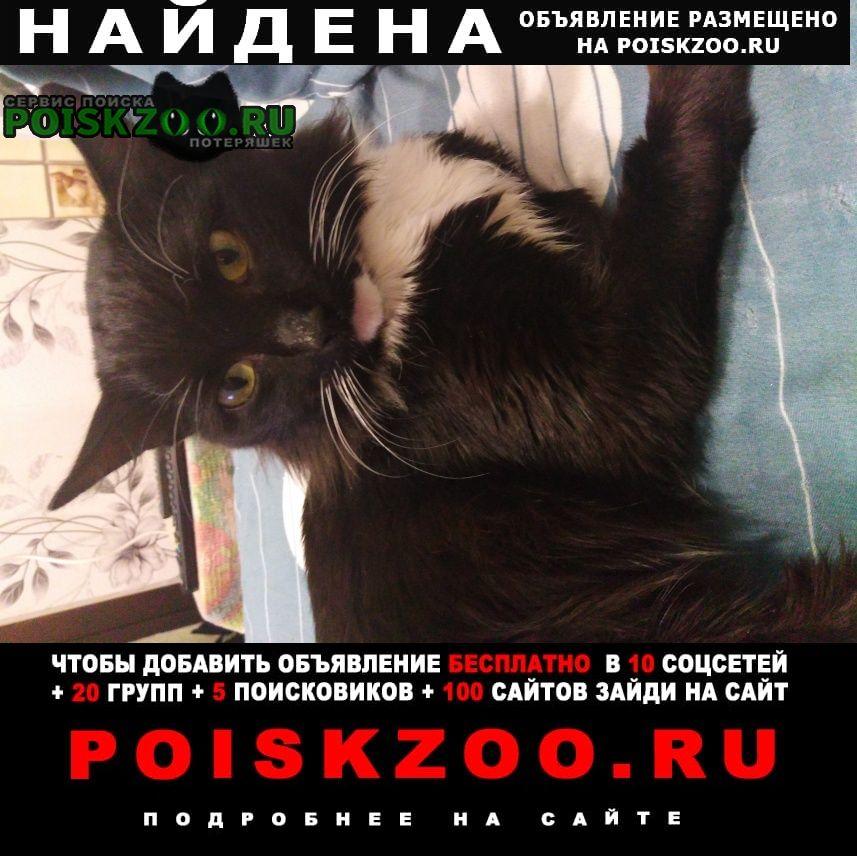 Найден котик Барнаул