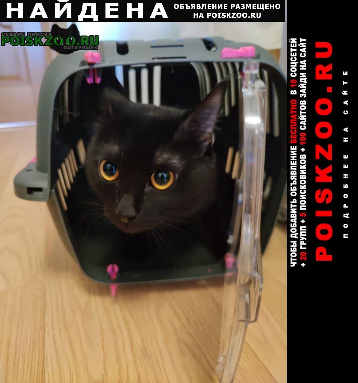 Найден кот черный Москва