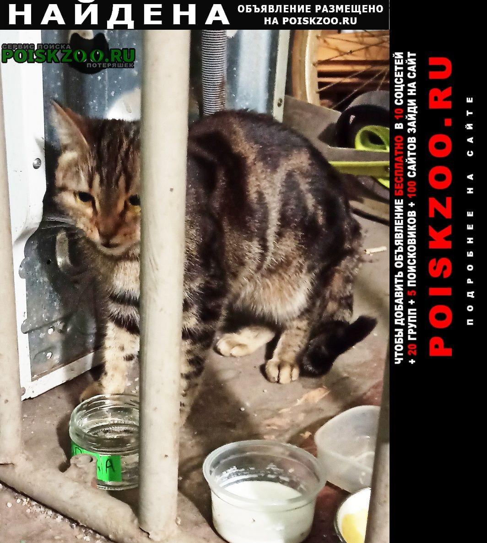 Найдена кошка sos она в опасности Москва