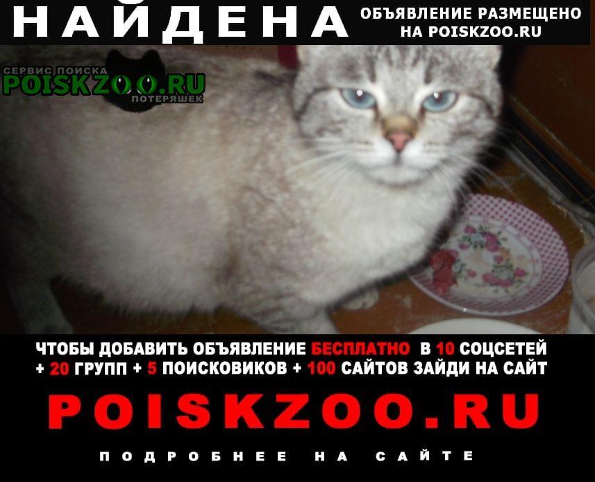 Найдена кошка, терновка Пенза