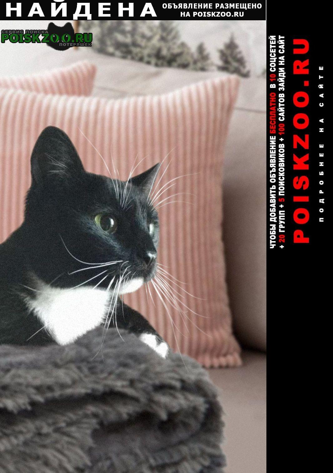 Найдена кошка стрелка ищет дом Белгород