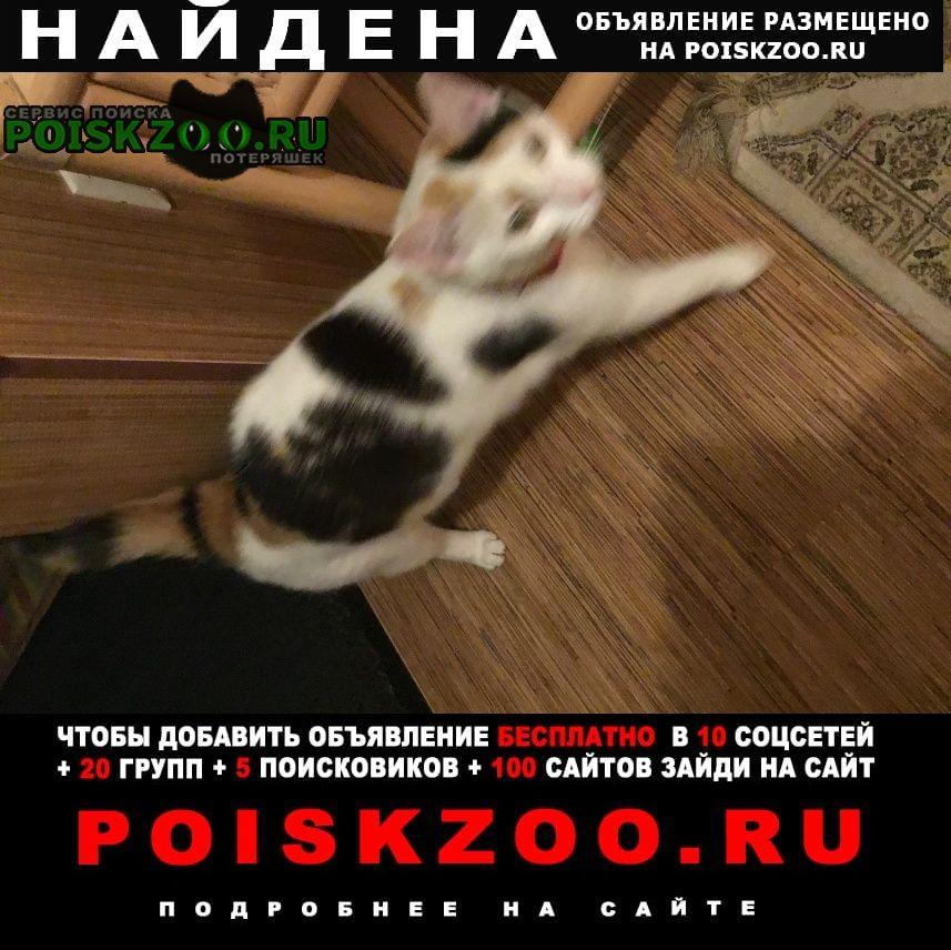 Найдена кошка Магнитогорск