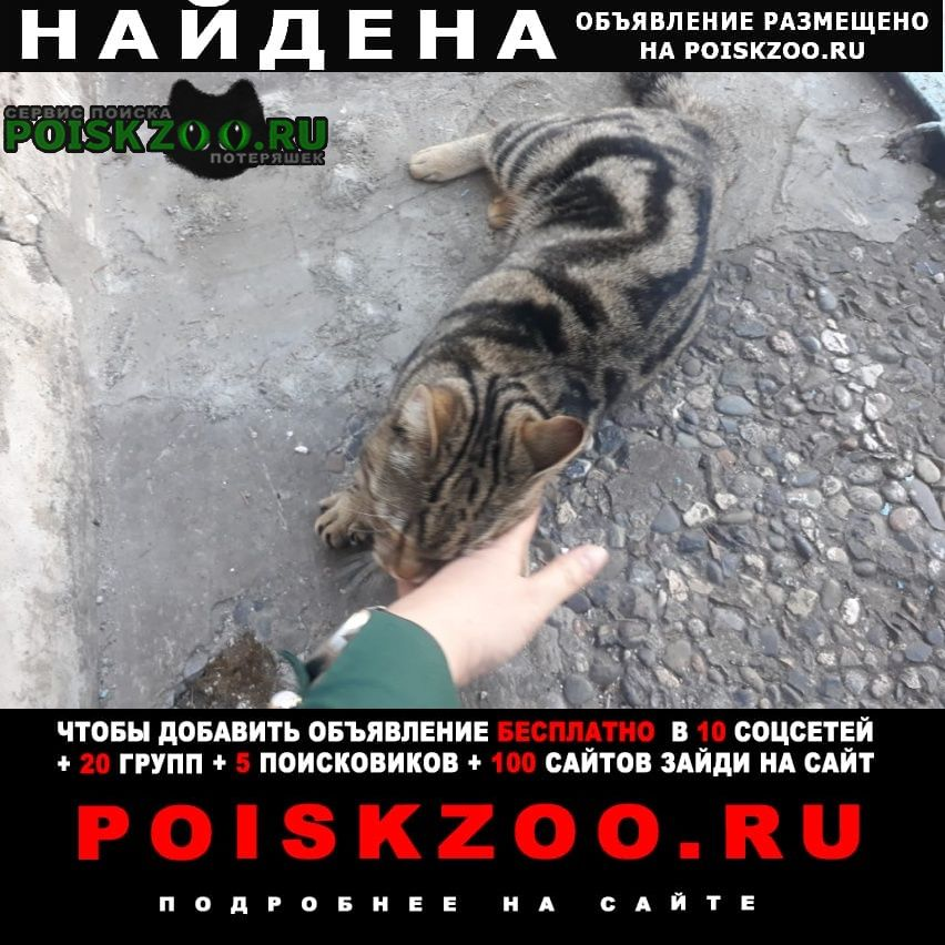 Найдена кошка (кот?) Новоалтайск