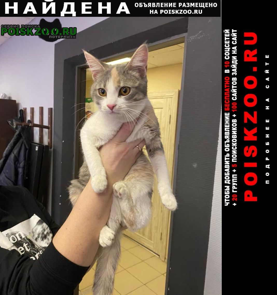 Найдена кошка район покровское стрешнево Москва