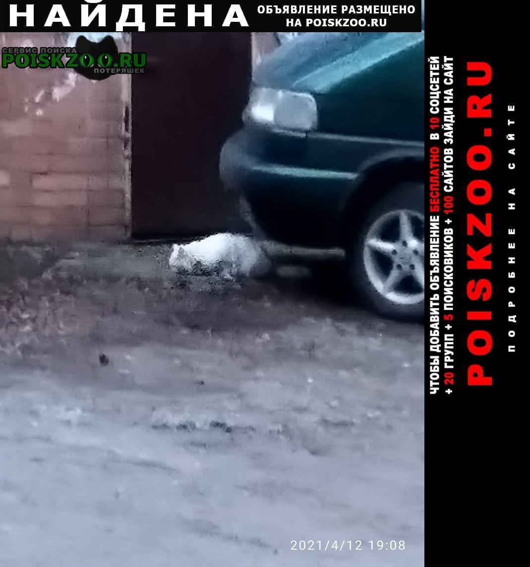 Найдена кошка ангор Ростов-на-Дону