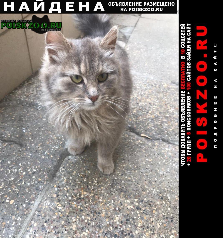 Найдена кошка обнаружена в красносельском районе Москва