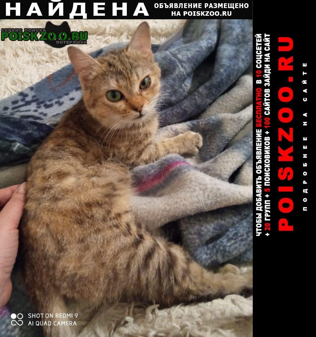 Найдена кошка Краснодар