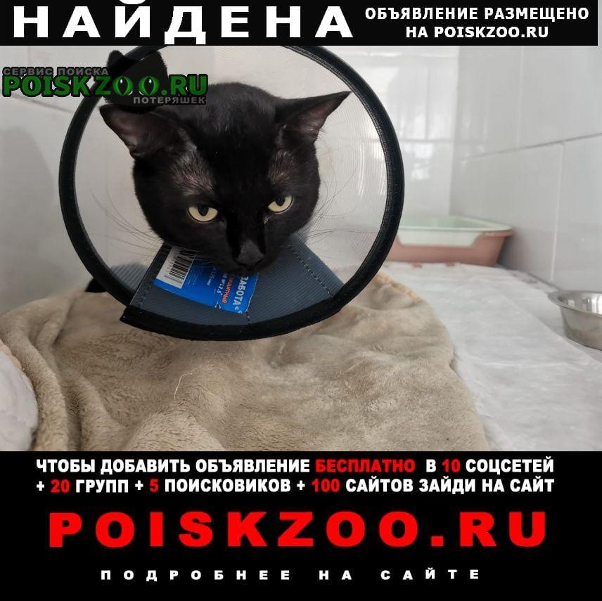 Найден кот чёрный по ярославке Сергиев Посад