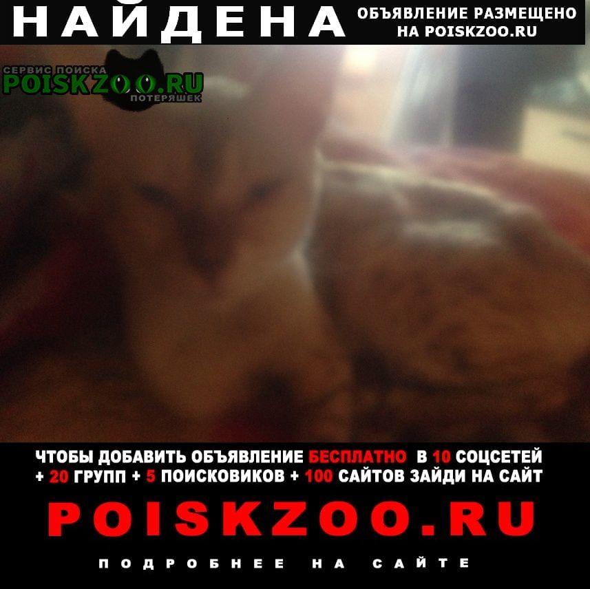 Найдена кошка Клин