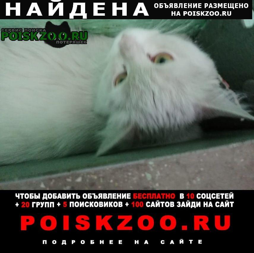 Найдена кошка ручная, зеленоглазая Москва