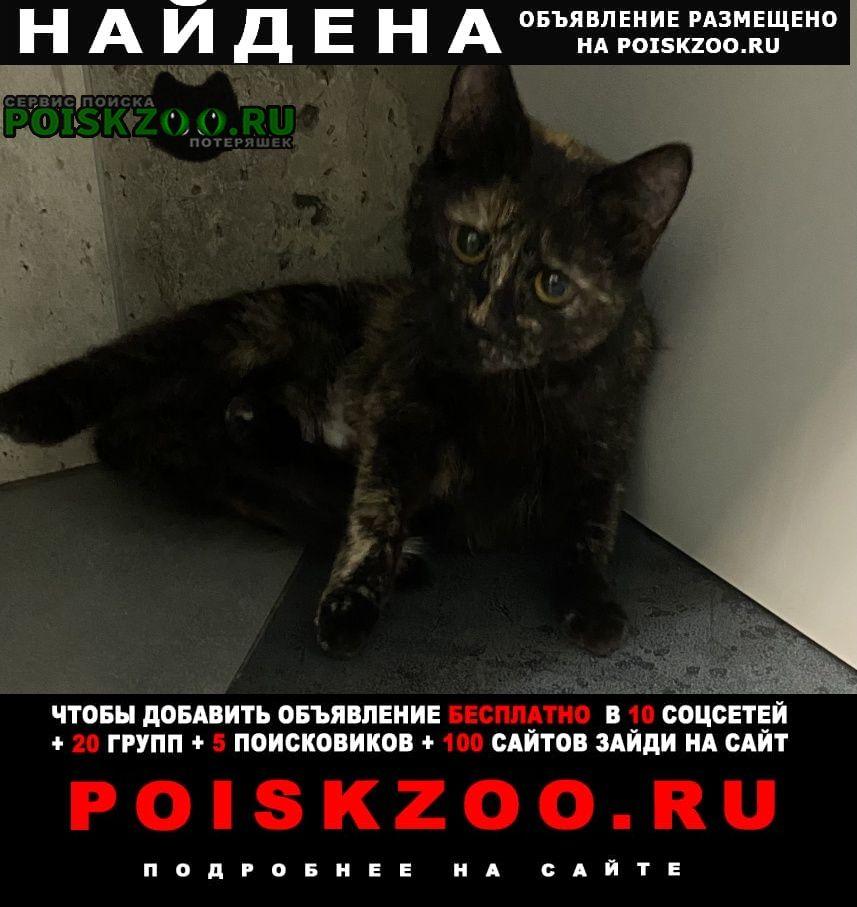 Найдена кошка метро парк победы, генерала ермолова Москва
