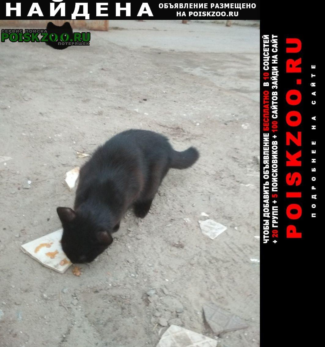 Найдена кошка в районе авалона Югорск