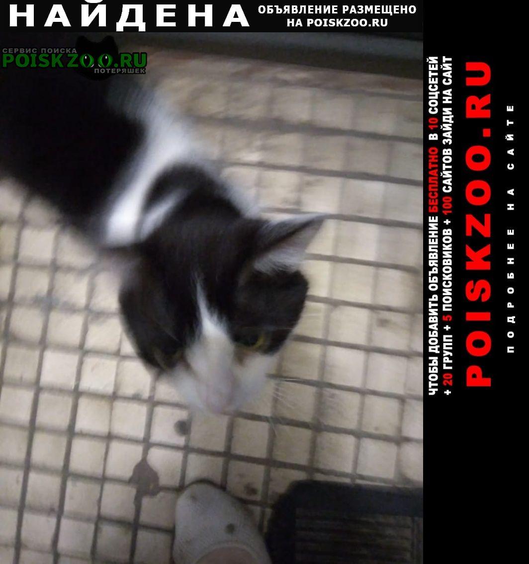 Найден кот Раменское