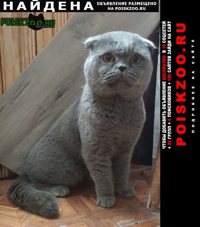 Найден кот шотландский вислоухий (с тиш-фолд) Нижний Новгород