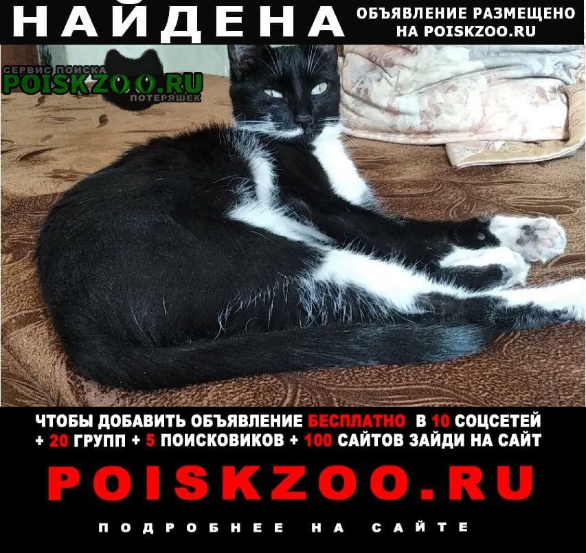Найдена кошка Омск