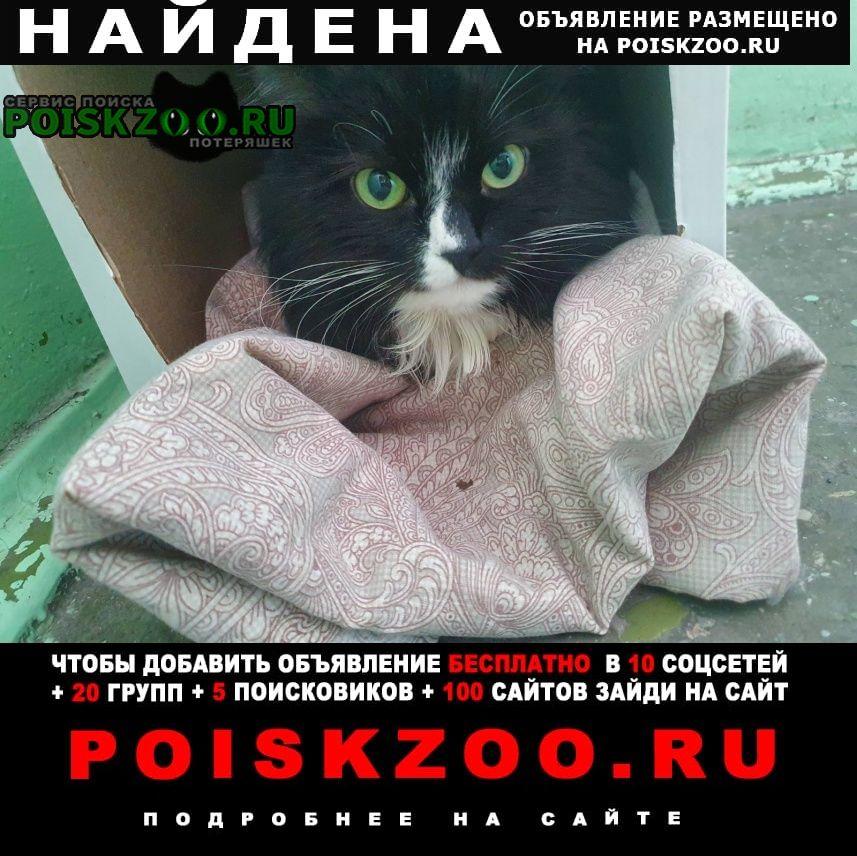 Найдена кошка Мурманск