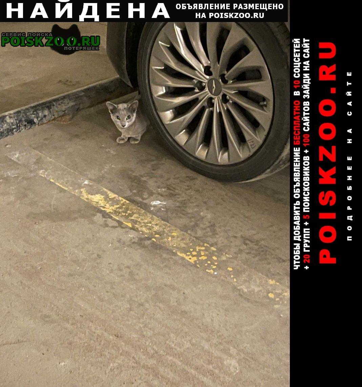 Найдена кошка сокольники. гастелло, попов проезд Москва