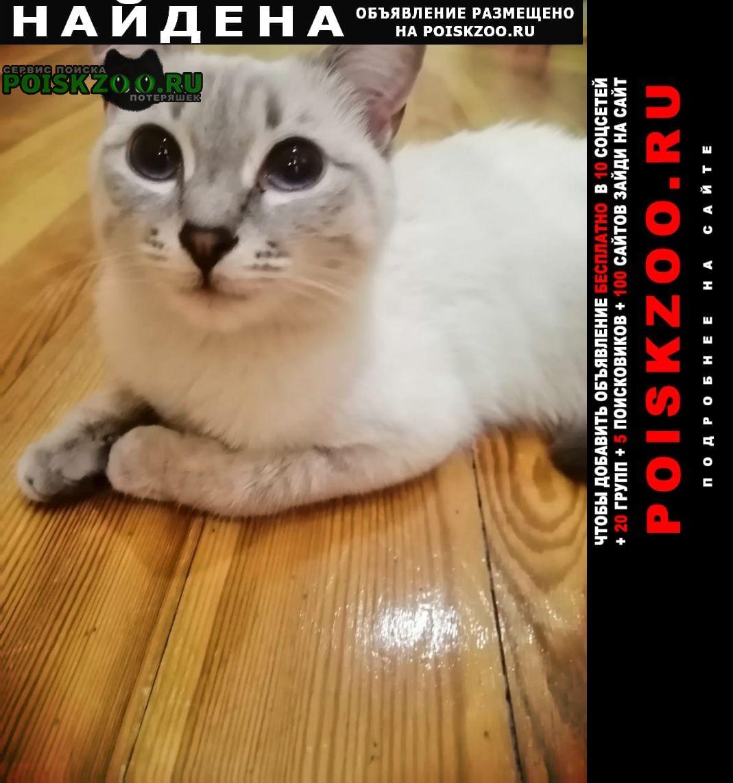 Найдена кошка ищем старых или новых хозяев Йошкар-Ола