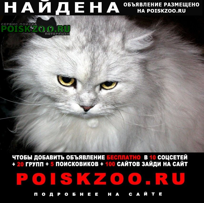 Найдена кошка на фото похожая Одинцово