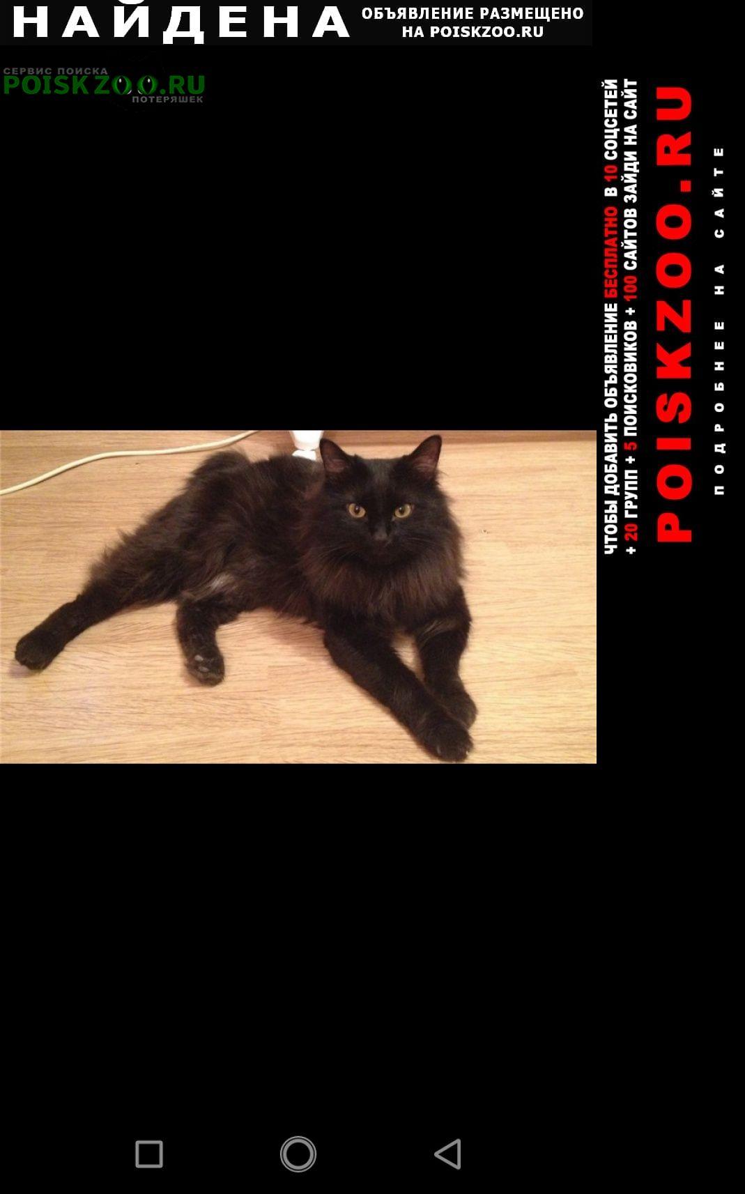 Найдена кошка черный бобтейл Раменское