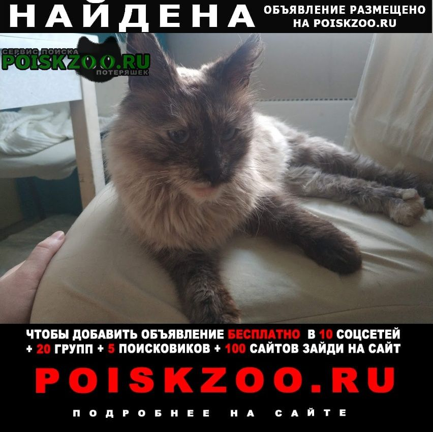Найдена кошка метро молодежная Москва