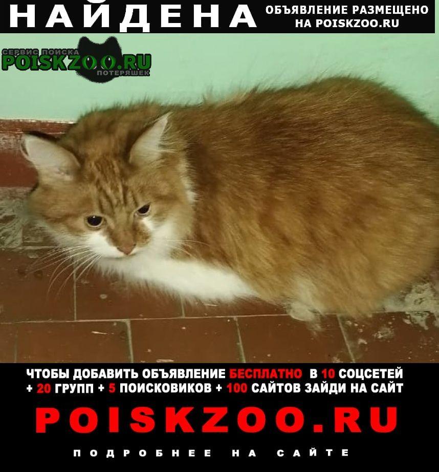 Найдена кошка пушистая рыжая с белым Обнинск