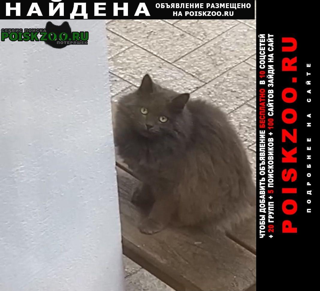 Найдена кошка. снт «здоровье» Ивантеевка (Московская обл.)
